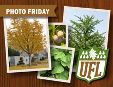UFL Photo Fridays